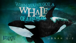 When You've Got a Whale of a Problem
